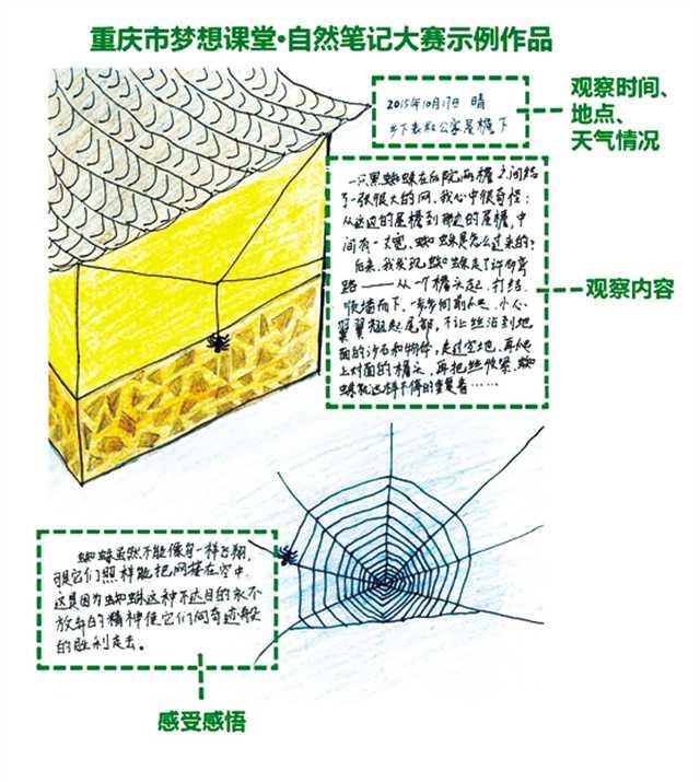 制作蜜蜂标本步骤图